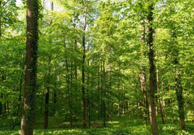 Stress lass nach:  Auf in den Wald!